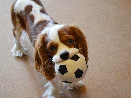 サッカーボールで2