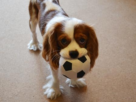 サッカーボールで
