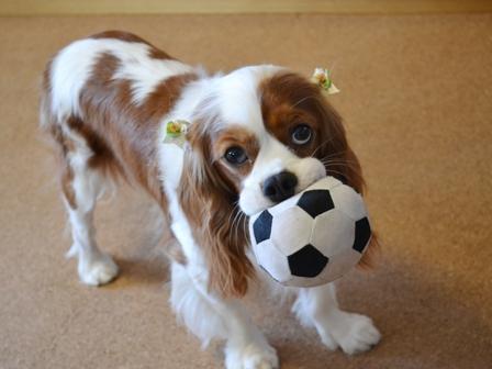 リボンとサッカーボール