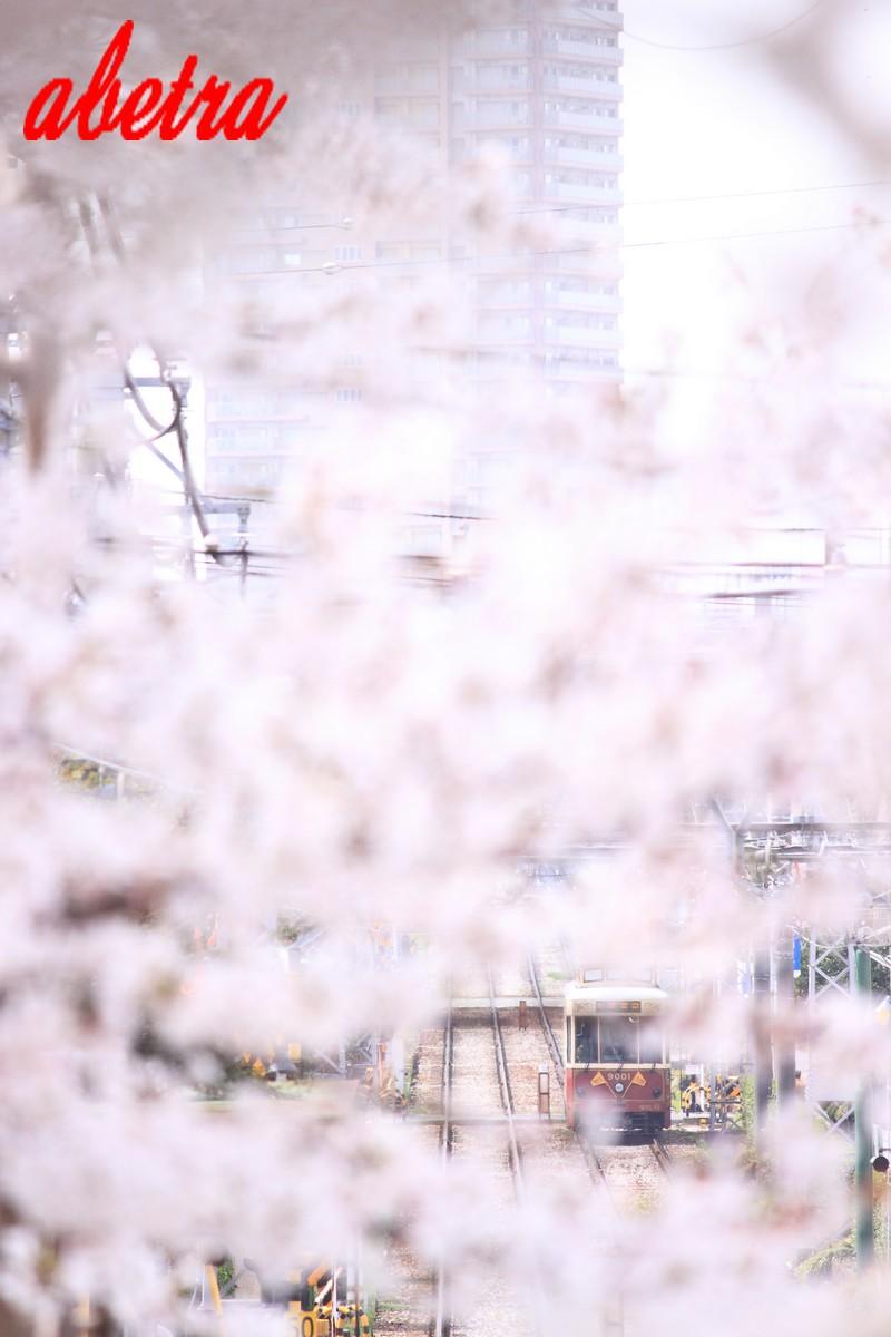 桜 de かくれんぼ