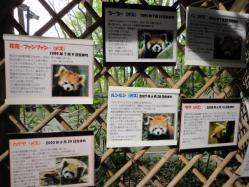レッサーパンダ写真表