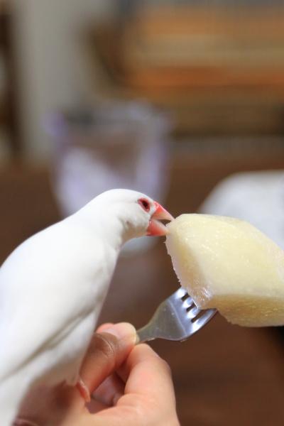 nasi kousui kuituki ga tigau (2)