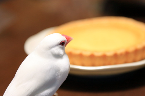 omiyage cheesecake (1)