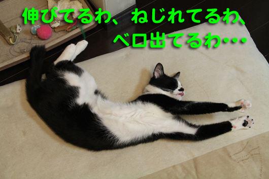 IMG_0104_R伸びねじベロ出