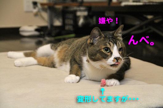 IMG_0062_R嫌や!んべ。
