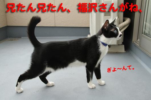 IMG_0025_R福沢さんぎよ~んて。