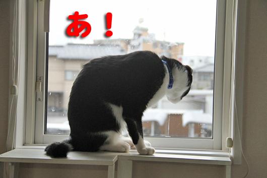 IMG_0051_Rあ!ゆきち