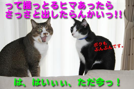 IMG_1022_Rさっさと出す!