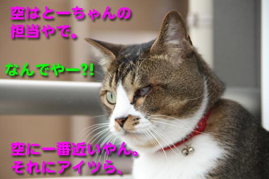 IMG_0780_R空担当とーちゃん
