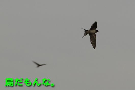 IMG_0857鳥トリ_R鳥だもんな。