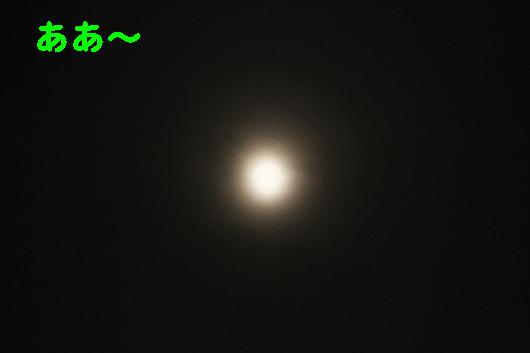 IMG_0230_Rああ~