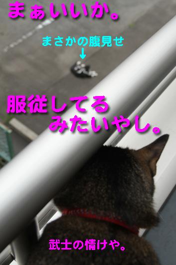 IMG_0117_R武士の情けや