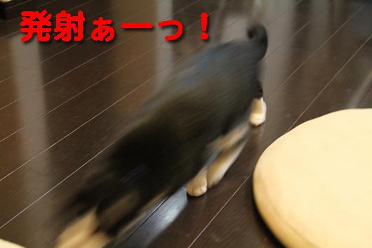 IMG_0220_R発射ぁーっ!