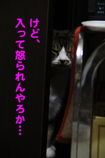 IMG_0149_R入って怒られる?