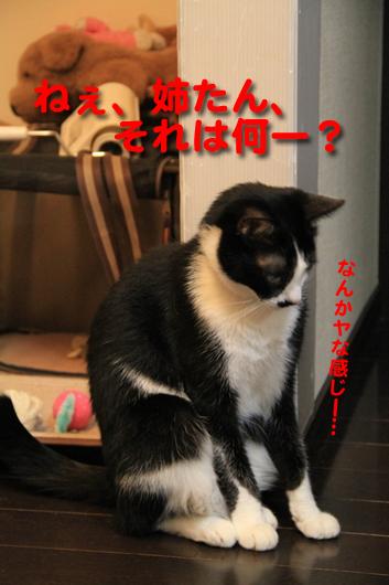 IMG_0114_R姉たんそれ何?