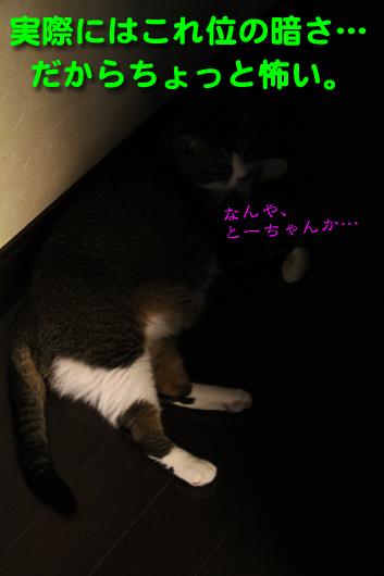 IMG_0129_R実際には暗い