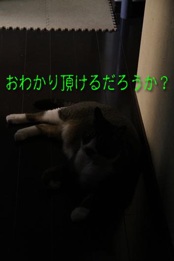 IMG_0133_Rおわかり頂ける?