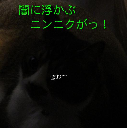 IMG_0133正方形_R闇のニンニク