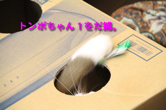 IMG_0121_Rとんぼちゃん拿捕