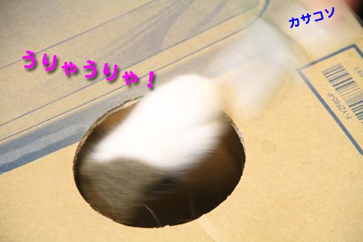 IMG_0138_Rうりゃカサコソ