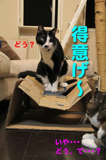 IMG_0106_R得意げゆきち