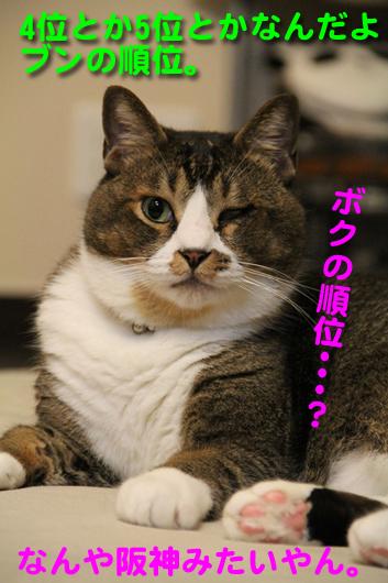 IMG_0045_Rブンの順位は4位とか5位阪神