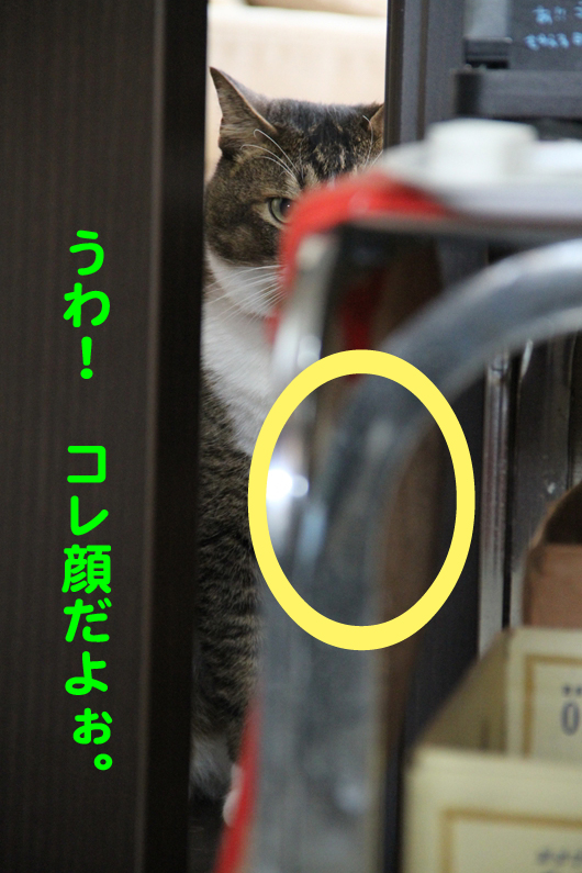 IMG_0112_Rコレ顔だよぉ。