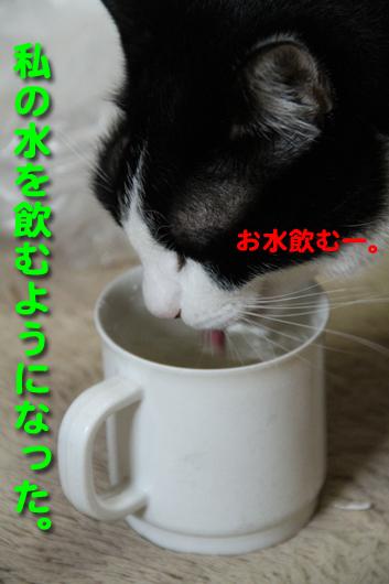IMG_0055_R私の水を飲む