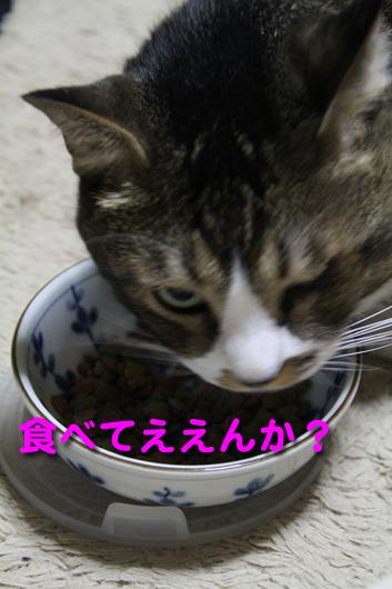 IMG_0021_R食べてええんか?ブン