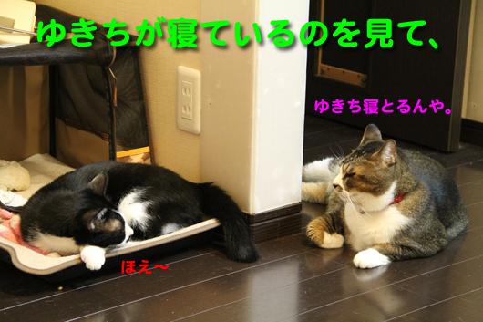 IMG_0408_Rゆきちが寝ているのを見て