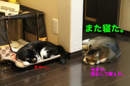IMG_0403_Rまた寝た。