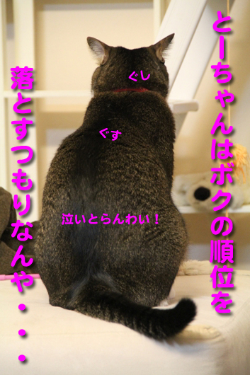 IMG_0429_R泣いとらんわい!