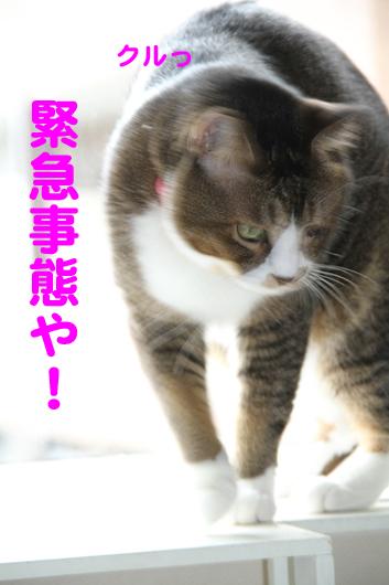 IMG_0180_R緊急事態や!