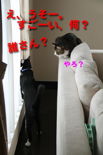 IMG_0215_Rうそすごーい何誰_edited-1