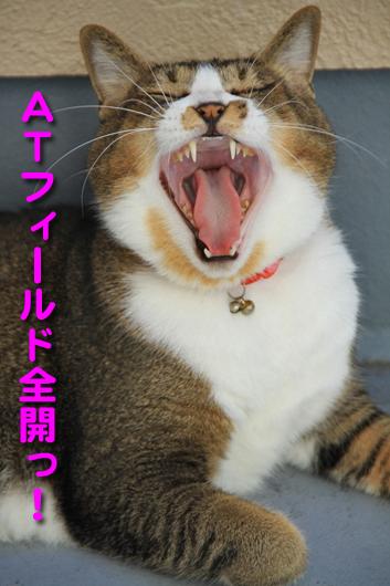 IMG_0014_RATフィールド全開っ!