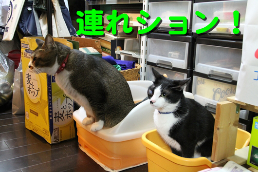 IMG_0090_R連れション!