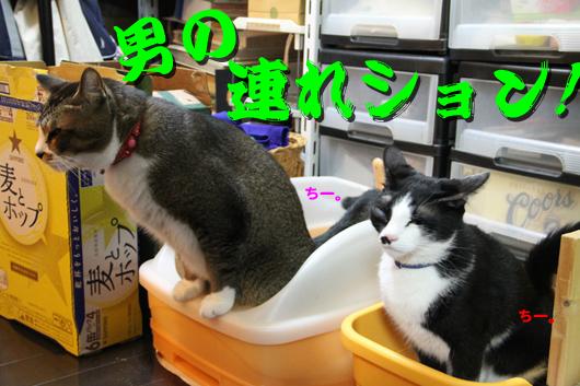 IMG_0091_R男の連れション!