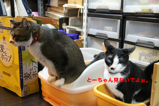 IMG_0093_Rとーちゃん見ないでよぉ。
