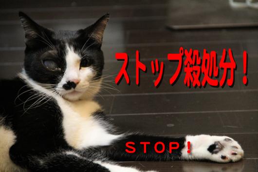 IMG_0155_Rストップ殺処分!