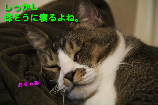 IMG_0687_R偉そうに寝るブン