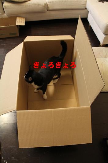 IMG_0039_Rきょろきょろ