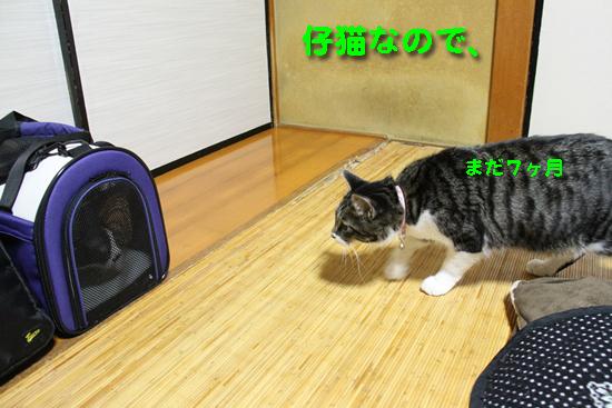 IMG_2745_R仔猫なので、