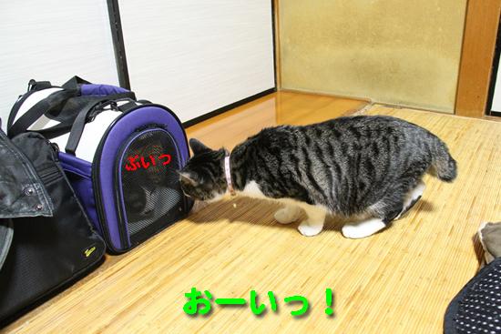 IMG_2750_Rぷいっ おーい!