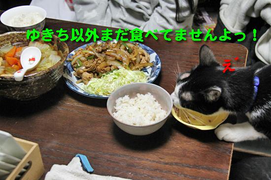 IMG_3496_Rゆきち以外まだ食べてませんよっ!