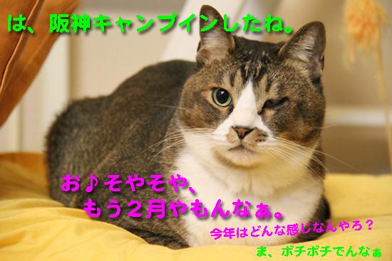 IMG_2334_Rは、阪神キャンプインしたね。