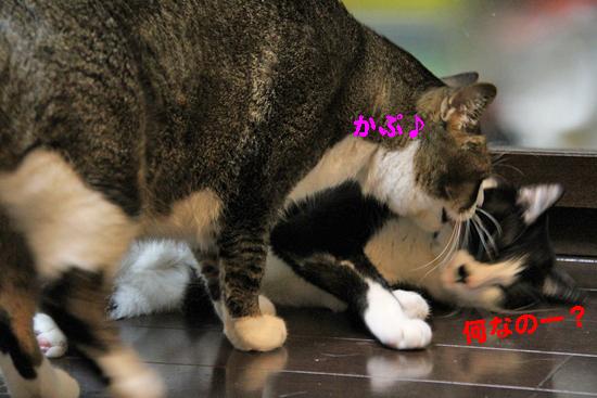 IMG_0253_Rかぷ♪何なのー?