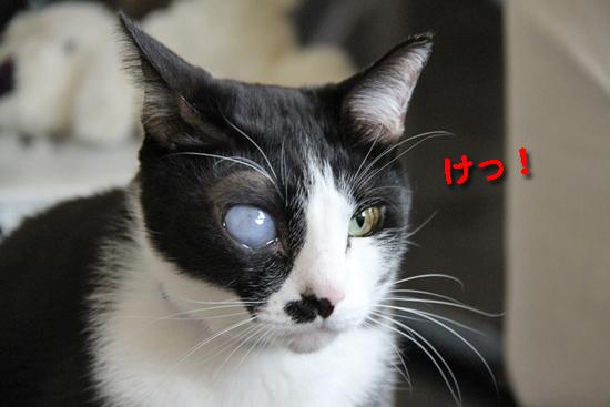 IMG_0348_Rけっ!ゆきち