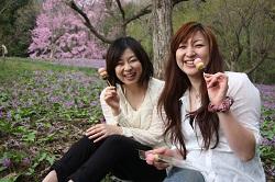 8紫のじゅうたんで八田菓子舗の花見だんご(特別に撮影許可をいただいてます。柵内は出入り禁止です)