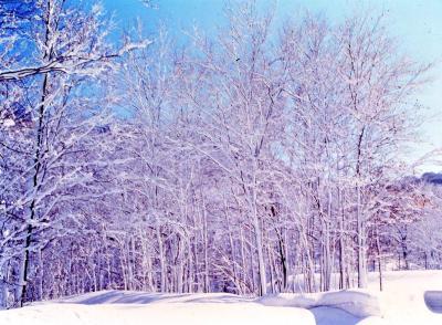 ブナ林(冬)縮小