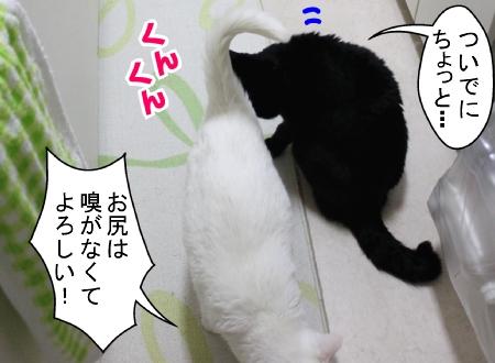 01120003_20130112120232.jpg